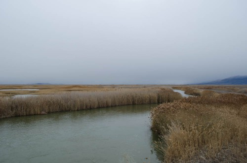 Bear River Migratory Bird Refuge in Brigham City