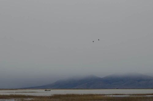Duck hunting at Bear River Bird Refuge in Brigham City