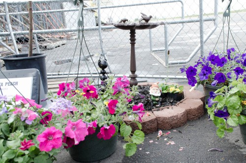 Petunia hanging baskets and a bird bath