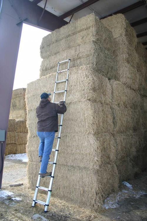 Telesteps ladder in a barn