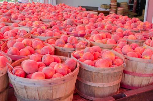 Peaches at Pettingill's fruit stand