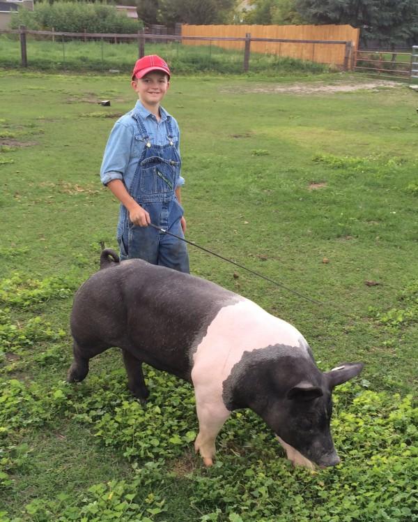 Wells Thompson walking his hog