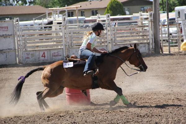 horse-program-2