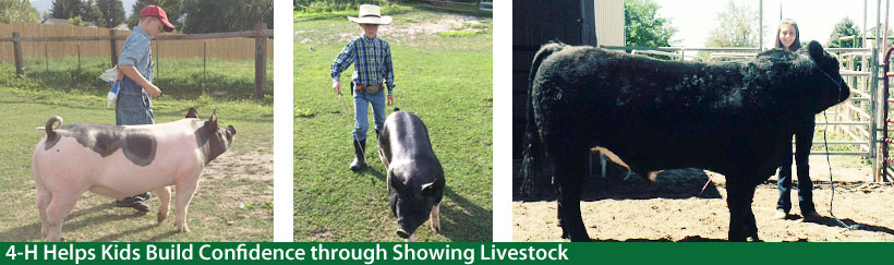 Help your kids gain confidence - sign them up for 4-H Livestock showing!