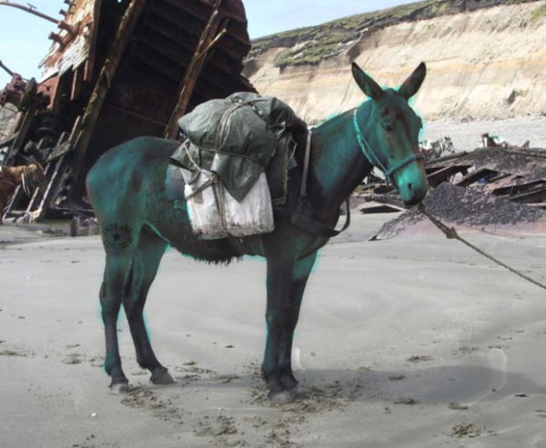 Blue Mule - image originally by Dario Urruty via Wikipedia
