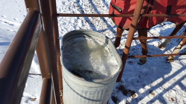 Frozen horse trough