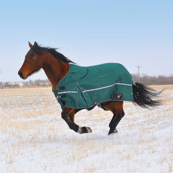 Equibrand 10K Cross Trainer Blanket