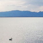 Northern Utah and Willard Bay Fishing Report - June 2016