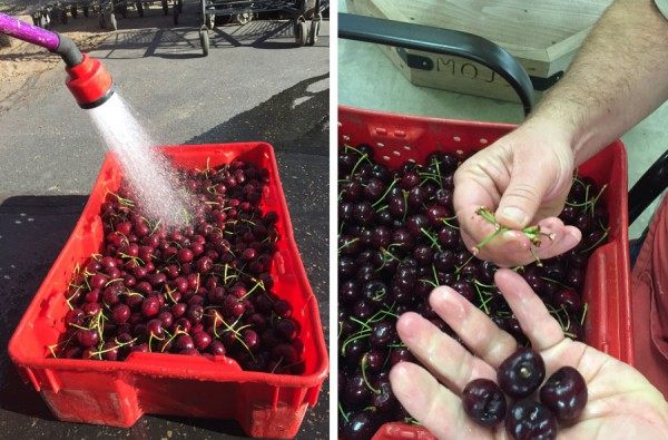 Washing cherries and removing the stems