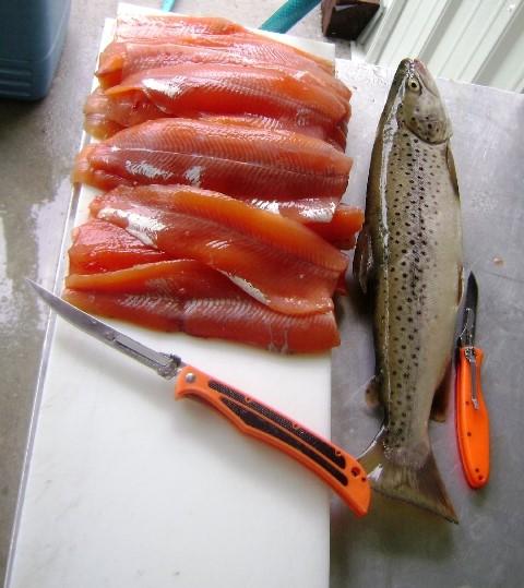 Fileting fish with the Havalon Piranta