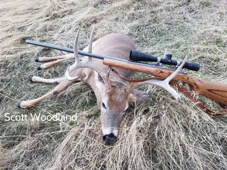 Scott Woodland's whitetail deer view #2