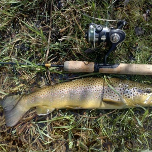 Kevin's Brown Trout