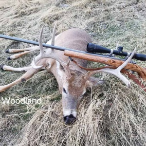 Scott Woodland's whitetail deer view #2